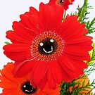 The Happy Gerberas by elsha