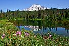 Reflection Lake by Dan Mihai