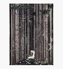 In the midst of the gloomy thick woods Photographic Print