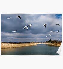Radipole Nature Reserve ~ Weymouth Poster