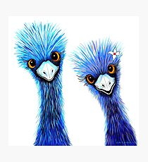 Quirky Emus Photographic Print