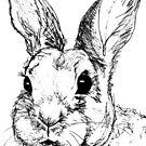 Rupert Rabbit by Robina Wilson