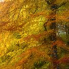Tree of Fire by Ann Garrett