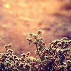 Atardecer color oro by Constanza Caiceo
