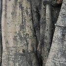 Tree trunk by Jack Bridges