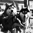 We three kings... by Jan Szymczuk