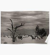 Menindee Trees Poster