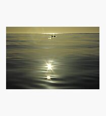 solitary dolphin in the sunlight Photographic Print