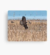 Duck Hunting Canvas Print