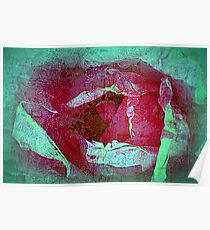 Texture Pink Rose Poster