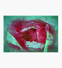 Texture Pink Rose Photographic Print
