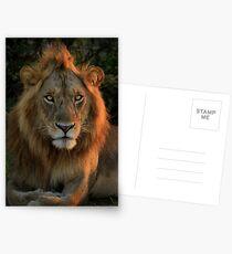 Resting Lion Postkarten