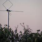 Birdee at dusk by minikin