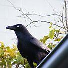 The Crow by minikin
