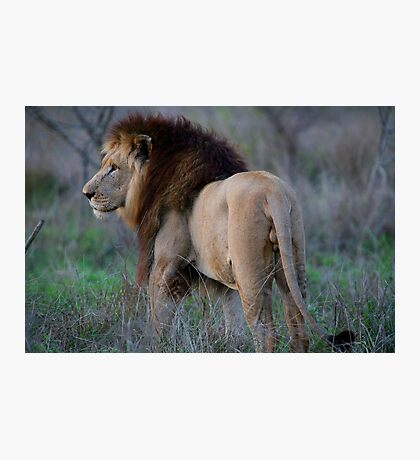 King of the Beasts Photographic Print