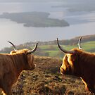 Enjoying the View - Highland Cattle by naturalnomad