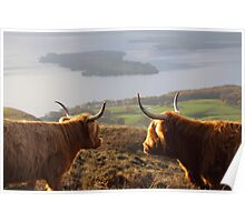 Enjoying the View - Highland Cattle Poster