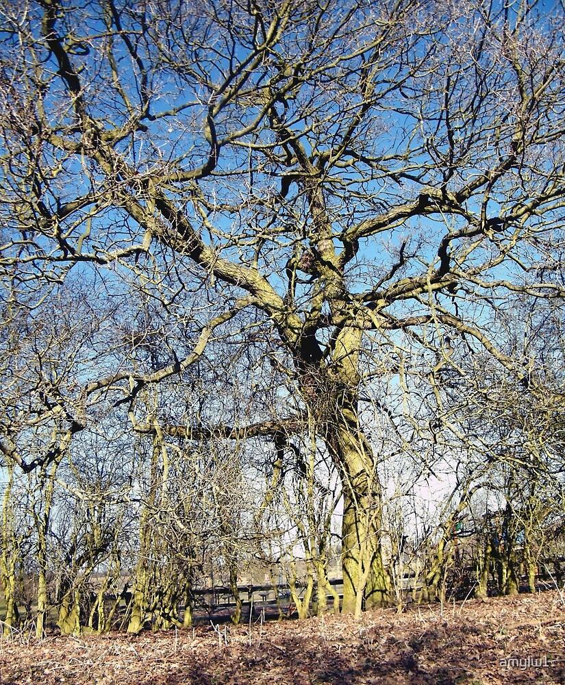 Tree by amylw1