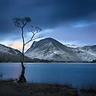 Lone Tree, Buttermere, English Lake District by Chris McIlreavy