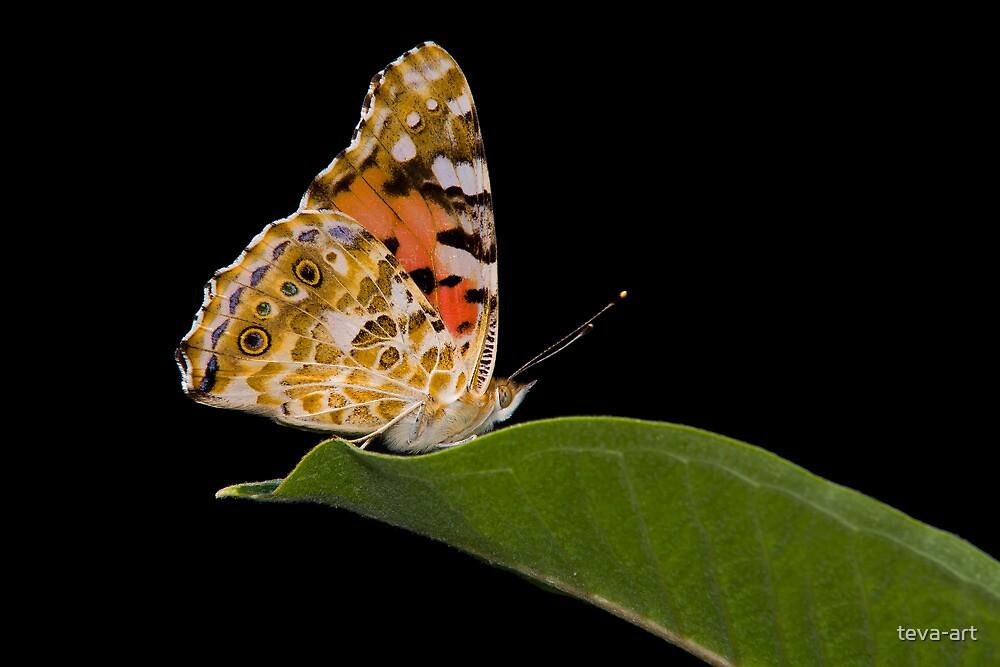 Butterfly on green leaf by teva-art