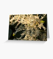 White Flowers in the Morning Greeting Card