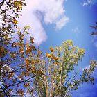 Blue, Blue Skies by amak