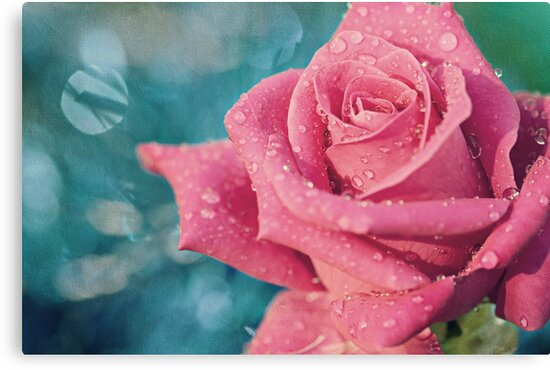 New Year's Rose by micklyn