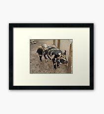 Black & Brown Pig Framed Print