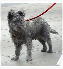 Shaggy Dog with Red Lead Poster