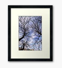 Bean Trees Framed Print