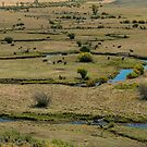 Cattle Country Landscape by Bo Insogna