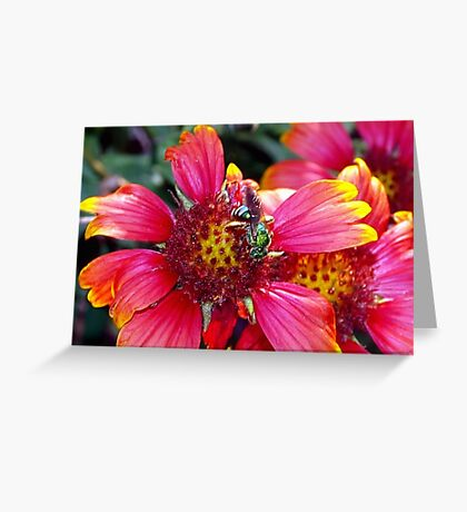 Green bee on red and yellow flower Greeting Card