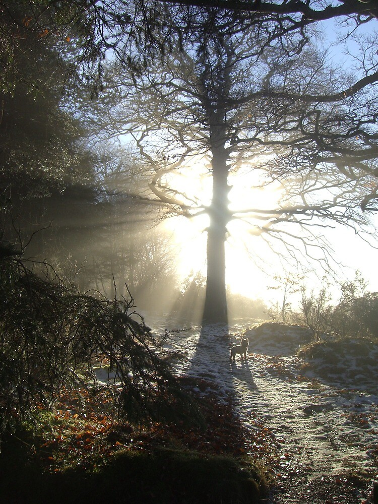 Spirit of the tree - Denlethen Woods by nungka