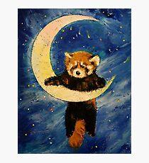 Red Panda Stars Photographic Print
