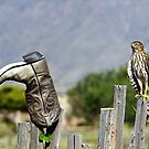 Boot Scootin Birdie by © Loree McComb