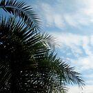 Ahhhhh.... Palm Trees... January 3, 2011 by Debbie Robbins