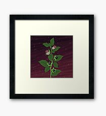 Deadly Nightshade Framed Print