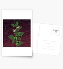 Deadly Nightshade Postcards