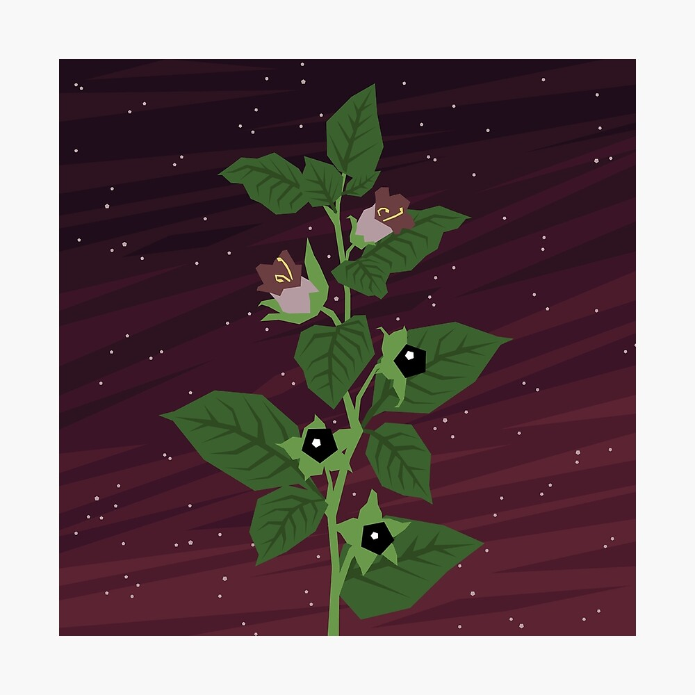 Deadly Nightshade Photographic Print