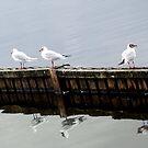 Birds Of A Feather by claraneva