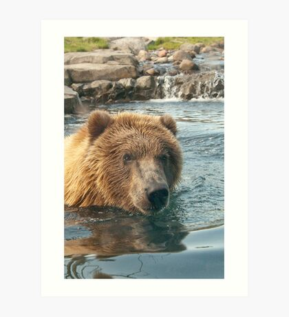 """""""Grizzled"""" - Grizzly Bear playing in water Art Print"""