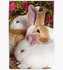 """The Bunny Bunch"" - rabbits snuggling Poster"