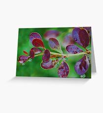 droplets,droplets Greeting Card