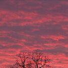 December sky by jeff lamb