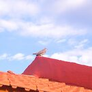 Little Bird by DCFotos