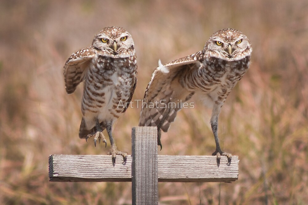 """""""Put Your Right Foot Out"""" - burrowing owls by ArtThatSmiles"""