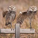 """Put Your Right Foot Out"" - burrowing owls by ArtThatSmiles"