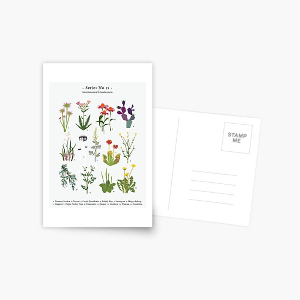 Canadian Prairie Botanicals Postcard