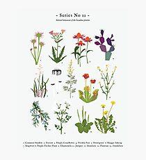 Canadian Prairie Botanicals Photographic Print