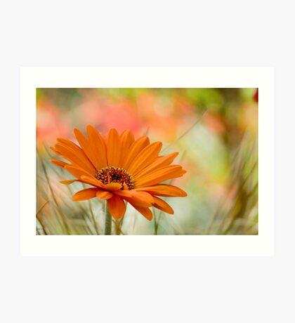 Orange Daisy Art Print